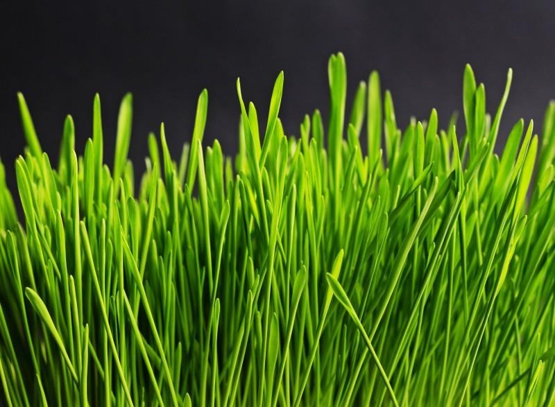 Find græsfrø til dine udendørsarealer hos Nykilde