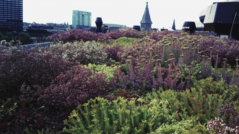 Buus Anlægsgartner tilbyder private og virksomheder smukke grønne tage