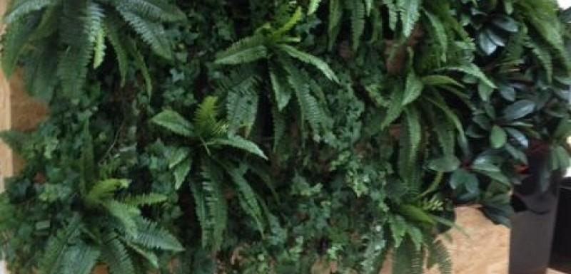 Plantevægge og deres brugsværdi